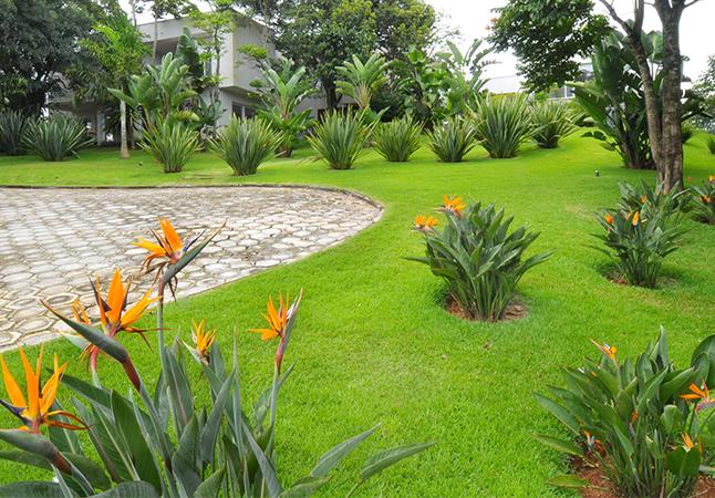 Confira cinco dicas para cuidar do seu jardim e mantêlo lindo
